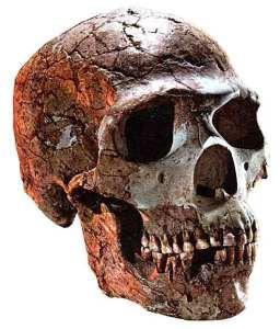 neanderthal 2.jpg