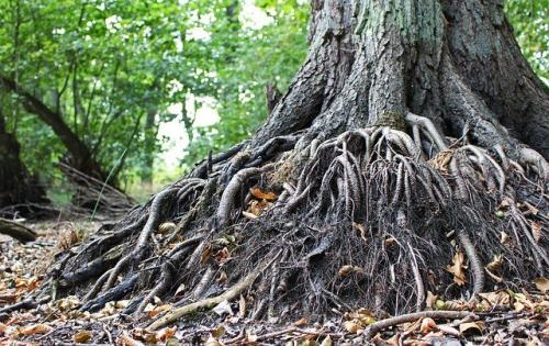 old-tree-3723105_640.jpg